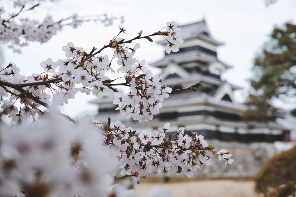 Fotografía de la rama de un almendro en primer plano, mostrando sus flores blancas. En el fondo, desenfocado, una típica construcción japonesa.