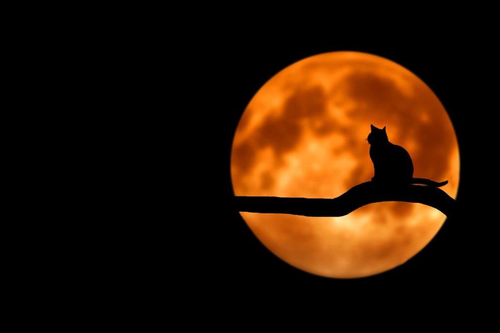 Sobre un fondo totalmente negro, se ve, a la derecha de la fotografía, una luna desenfocada, anaranjada con tonos amarillos. Sobre esta, un gato negro posado sobre una rama, silueteado. No hay más. Así de simple, pero bonito.